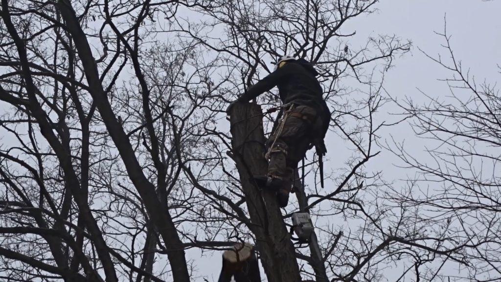scinanie drzew sekcyjnie Krakow