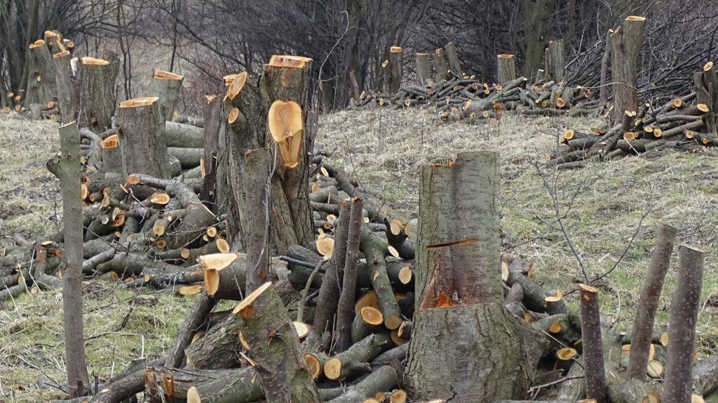 wycinanie drzew wyrywanie korzeni nowa huta igolomia