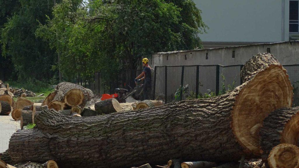 uslugi wycinania drzew