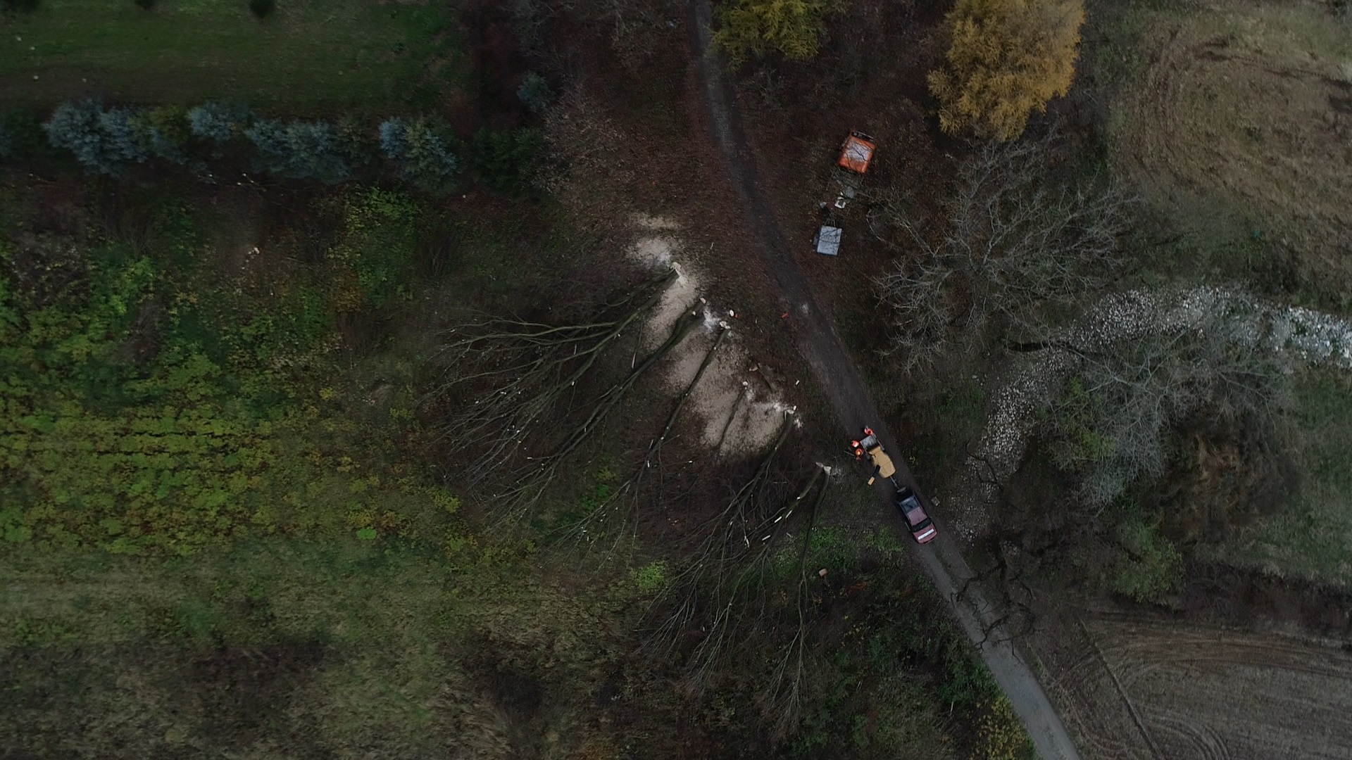 Kompleksowe usługi wycinania drzew